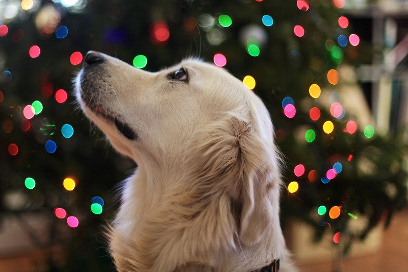 Keeping your pet safe, happy, healthy and warm this Holiday Season!
