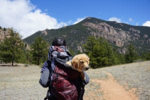 keeping your pet safe traveling Pet
