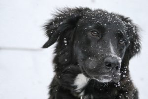 keeping your pet safe dog in Snow